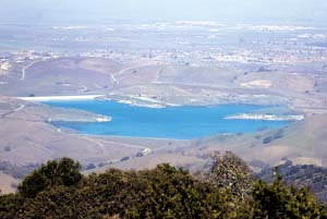 Invasive zebra mussels found in Hollister reservoir; first known discovery of species in California
