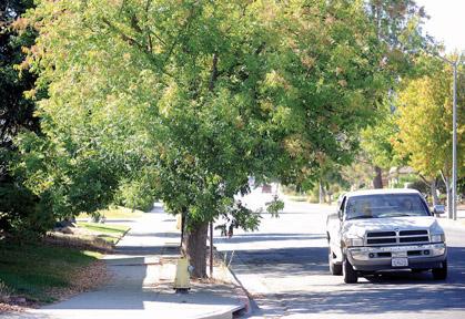 Hollister council ends sidewalk repair fees