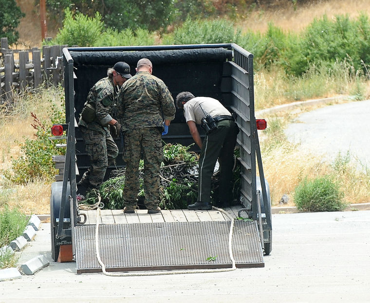10,000 pot plants seized in park north of 152