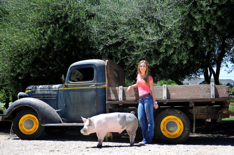 Teen prepares Heritage Hog for her final fair