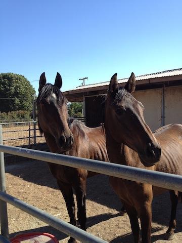 Horse sanctuary bucks closure with contribution