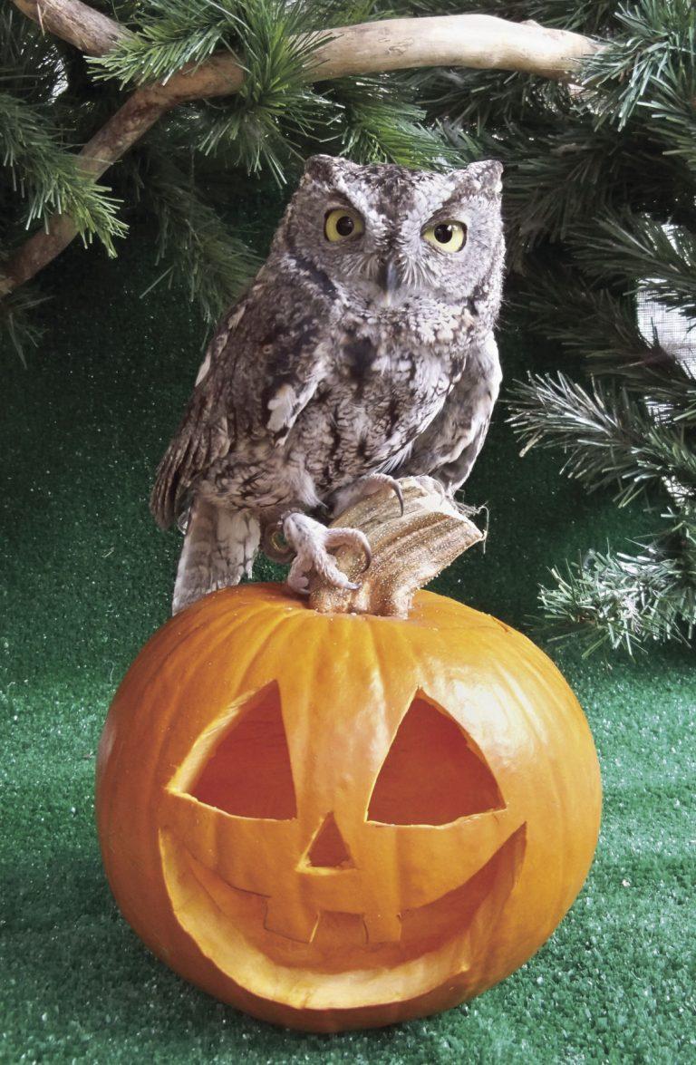 Haunting Owls